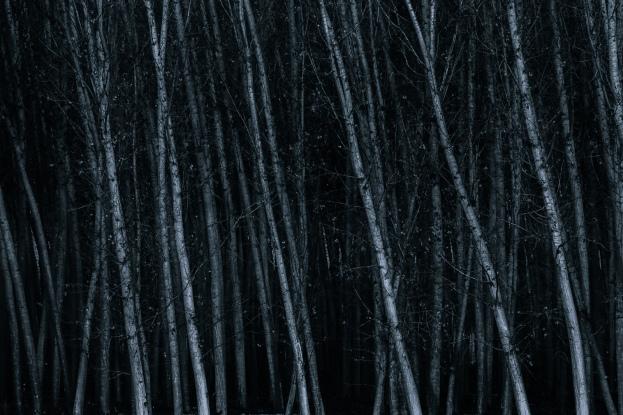 Alma de bosque #1