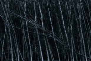 Alma de bosque #2