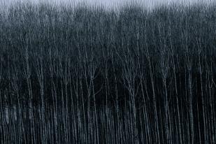 Alma de bosque #3