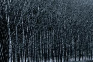 Alma de bosque #4