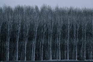 Alma de bosque #5