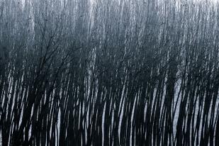 Alma de bosque #6