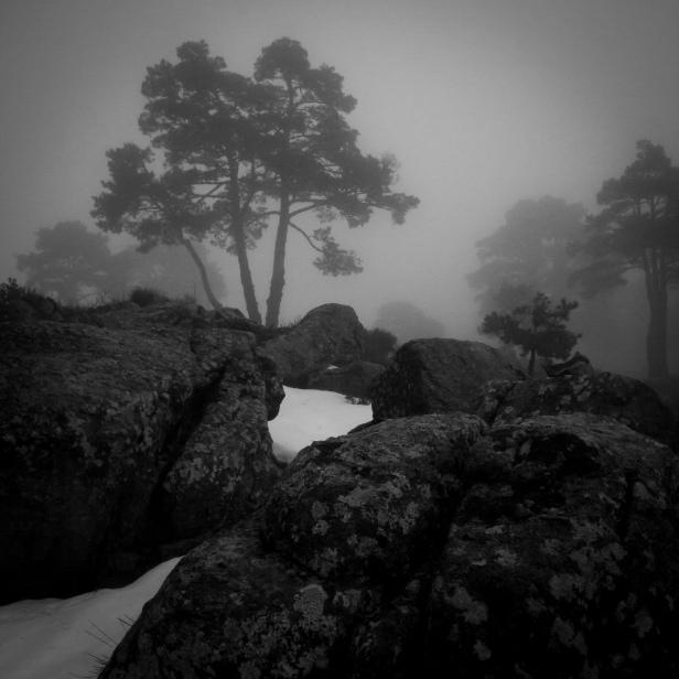 Bosque de pinos envuelto en niebla #2, atardecer de primavera, Sierra de Guadarrama, 2014